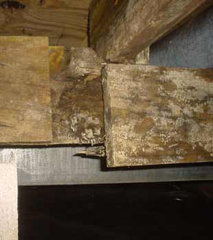 Extensive basement rot found in Manchester by Basement Systems GB