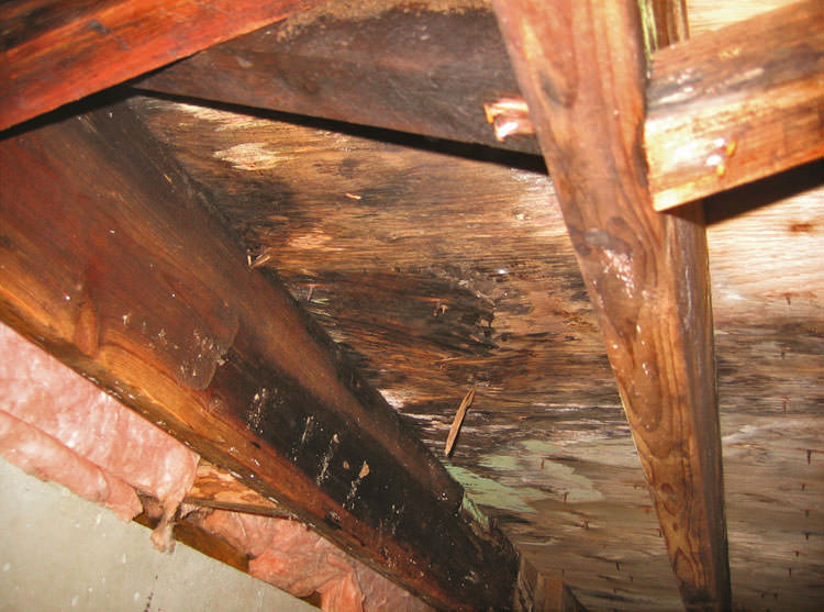 crawl space mould rot in london birmingham manchester bristol