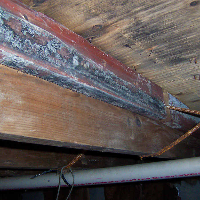 Replacement Of Mould Damaged Wood In London, Birmingham